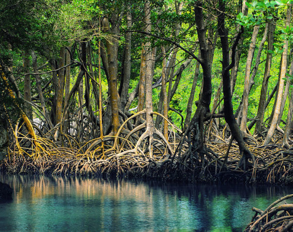The Global Mangrove Alliance