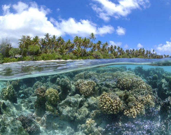 International Alliance to Combat Ocean Acidification