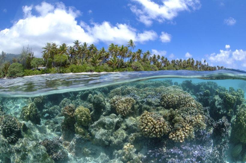 International Alliance to Combat Ocean Acidification