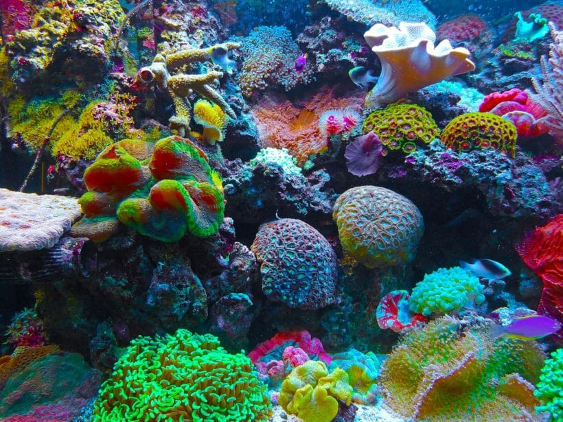 Global Coral Reef partnership