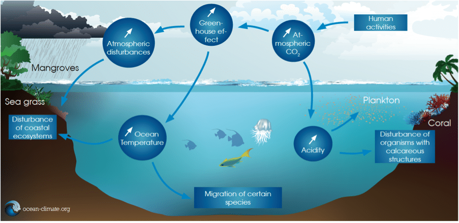The Next 100 Years >> Marine ecosystem resilience - Ocean & Climate Initiatives Alliance